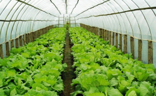 向生态农业要高效