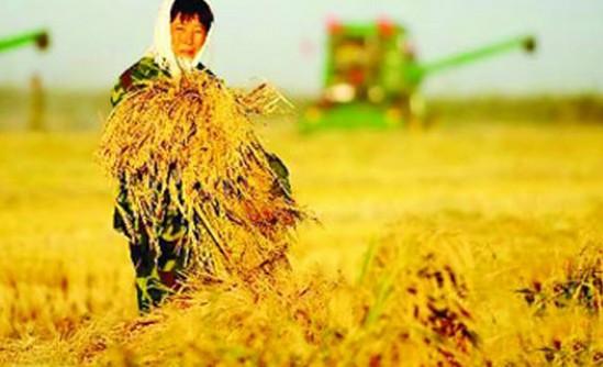 新一年一号文件锁定农业科技