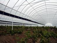 养殖大棚怎样来提高经济效益