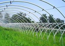 大棚种植移裁定植技术