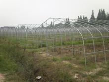 大棚种植技术来提高蔬菜的种植技术 提高生产