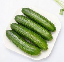 有机蔬菜种植要点_防止番茄脐腐病