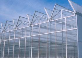 大棚种植方法_大棚蔬菜种植技术
