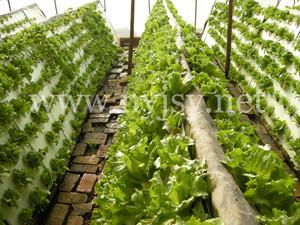 大棚蔬菜施肥方法_蔬菜大棚种植要点