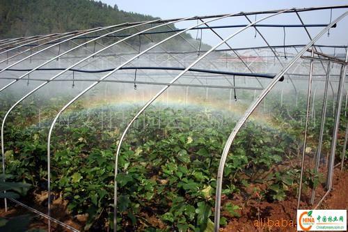 大棚蔬菜的管理技术_日光大棚种植科学方法