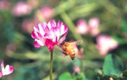 几乎每个人都有胃病,蜂王浆能有效防治