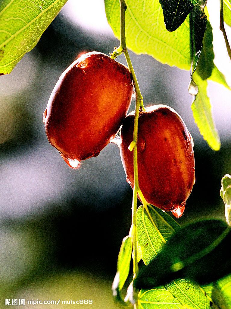 教你更营养更有效的红枣吃法