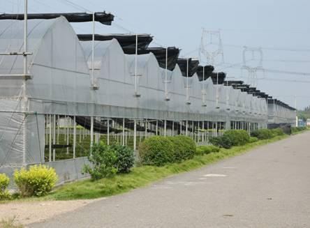 春季温室大棚的温湿度的要求
