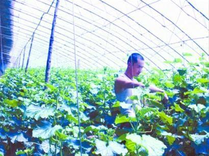 大棚蔬菜营养素缺乏症及补救措施