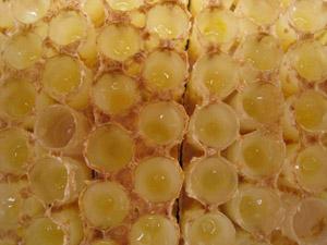 蜂王浆是从这里来的