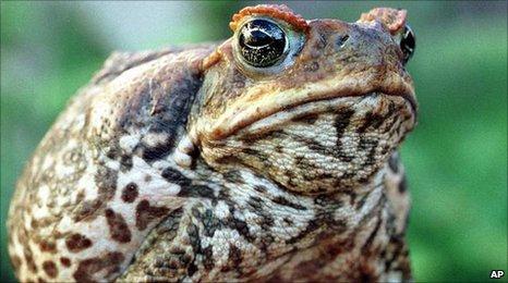 蟾蜍的生活环境介绍