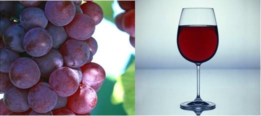 天然健康葡萄酒的酿制方法