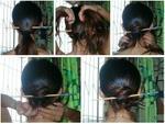筷子马尾发型