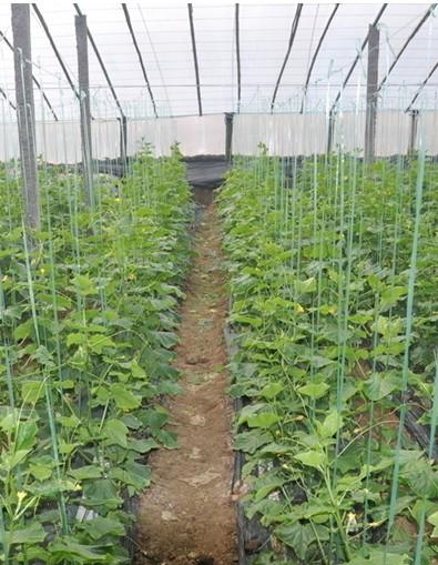用于盆花及切花栽培以及果树等的大棚