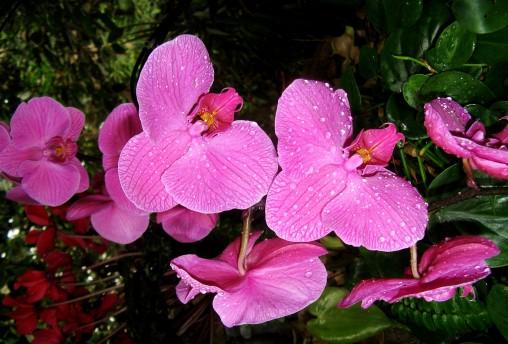 蝴蝶兰在夏天中容易出现的病症现象