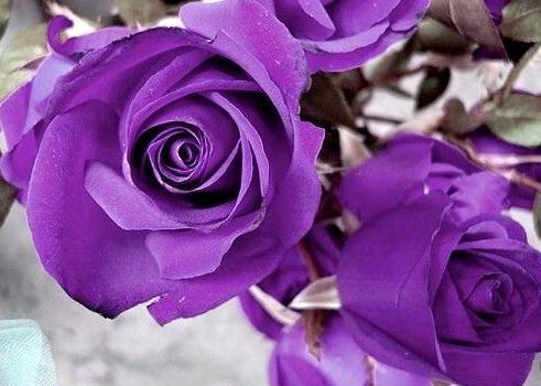 罗志祥借紫玫瑰崔旺爱情和事业