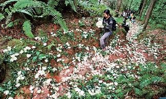 白玫瑰代表什么意思_轰动一时的送花新闻