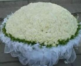 白玫瑰代表什么意思_999朵白玫瑰的价格与花语