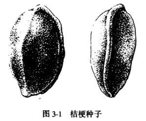 桔梗的繁殖方法和必须注意的技术事项