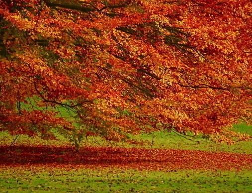 法国的秋天