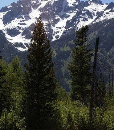美国风景秀丽的森林
