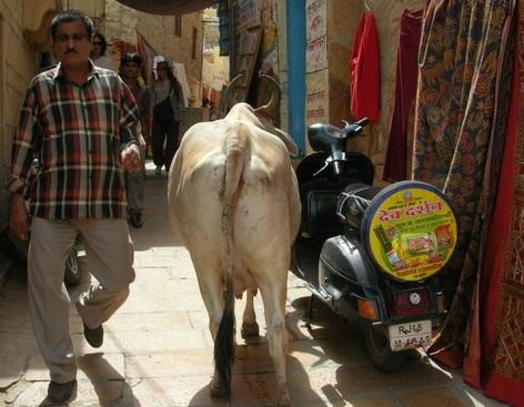 印度的人和马