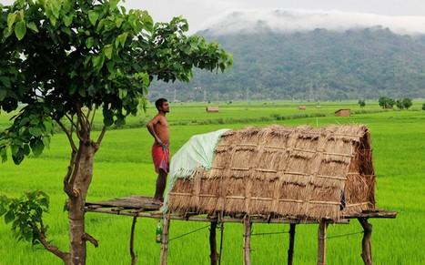 印度美丽的田园风景