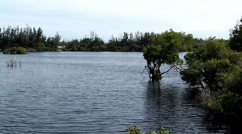 越南的湖水和树林