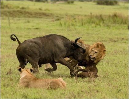 博茨瓦纳的城市中人和动物都是和谐相处之一