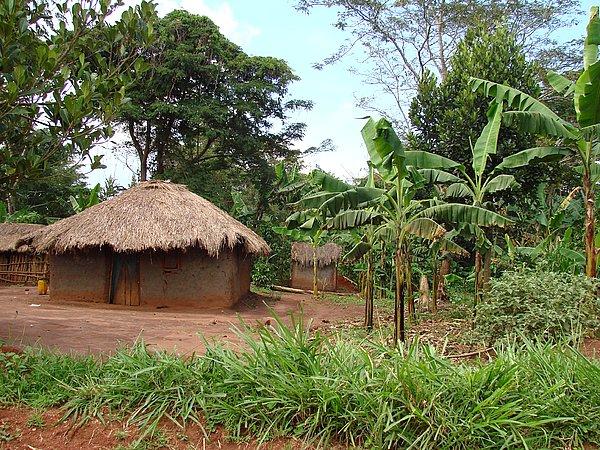 乌干达的原始森林公园布温迪国家公园