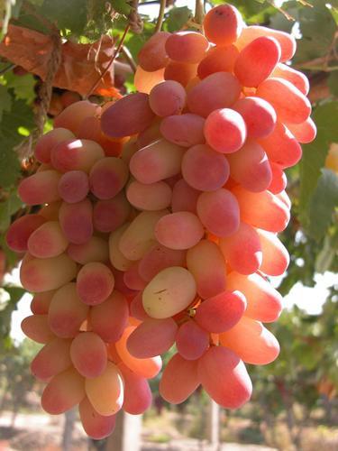 摩尔多瓦葡萄酒酿造企业对成品防伪采用全息图技术