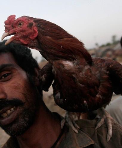 巴基斯坦源自波斯语的字的意思为圣洁的土地