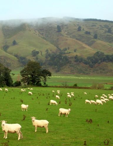 新西兰的鹿茸奶制品和粗羊毛的出口值皆为世界第一