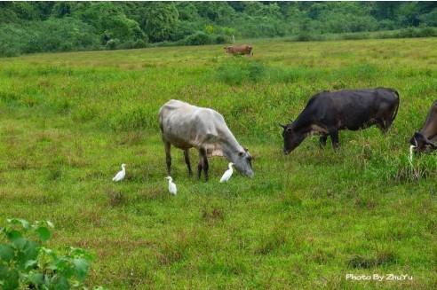 委内瑞拉人主要以牧场为经济收入来源